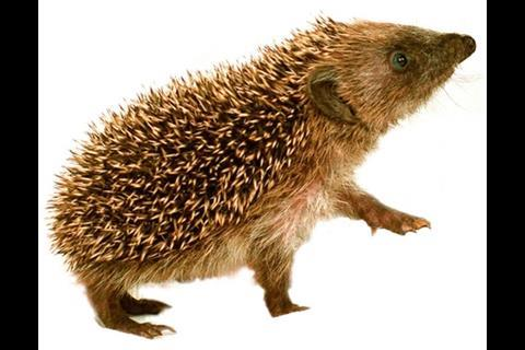 "Its original hedgehog logo (erinaceous means ""like a hedgehog"") has been retained"